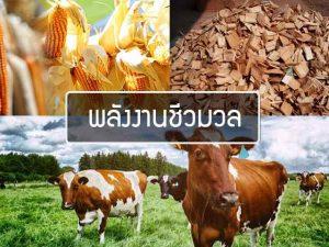Energy-biomass